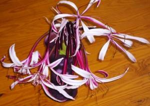 Crinum - Spider Lily