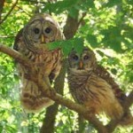 Thurston House owls during your stay for Special Friday Nights at the Morse!