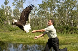 Release of an eagle.