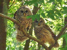Two Owls make their home at our Maitland Florida Lodging