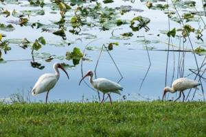 Birds by pond