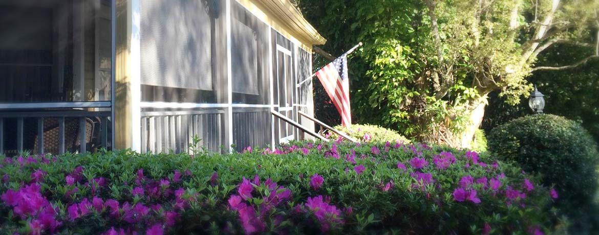 Purple Flower and US flag